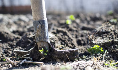 Sowing in the Soil of Doubt