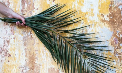 palm sunday youth lesson